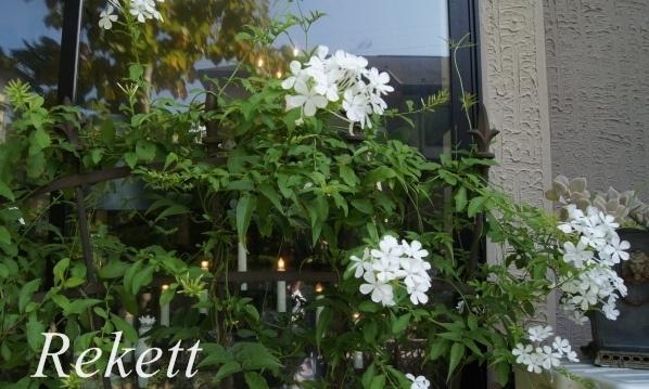 ガーデンにおすすめです~❤_f0029571_03194018.jpg