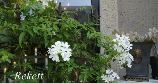 ガーデンにおすすめです~❤_f0029571_03233985.jpg