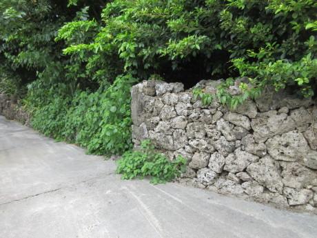 7月16日 久高島(くだかじま)_a0203003_10254579.jpg