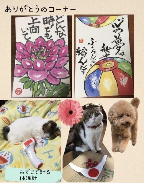 沖縄のメグちゃんちのワン猫ちゃん がっちょん達_f0375804_07171242.jpg