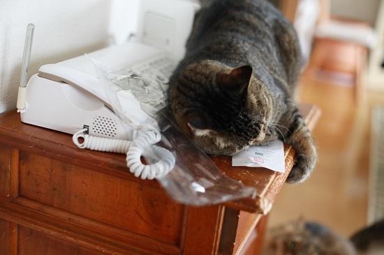 猫に魚!!「ふくねこ マグロけりけり」_e0364523_17200359.jpg