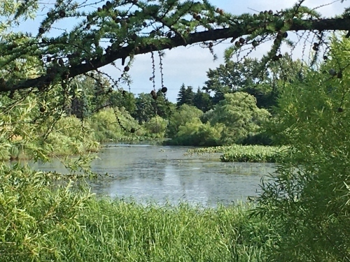 あいの里緑地散歩と薬草園_e0326953_19463758.jpg