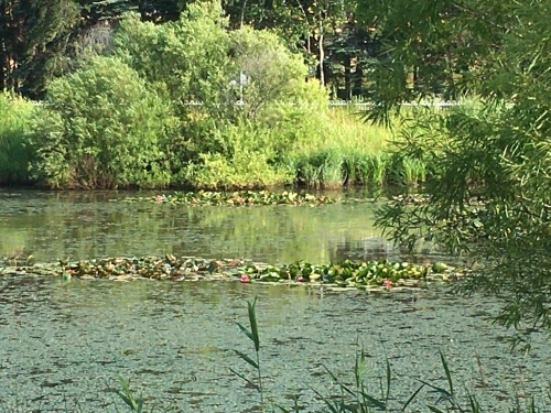 あいの里緑地散歩と薬草園_e0326953_19464648.jpg