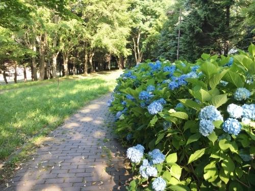 あいの里緑地散歩と薬草園_e0326953_19485479.jpg