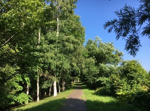 あいの里緑地散歩と薬草園_e0326953_19491148.jpg