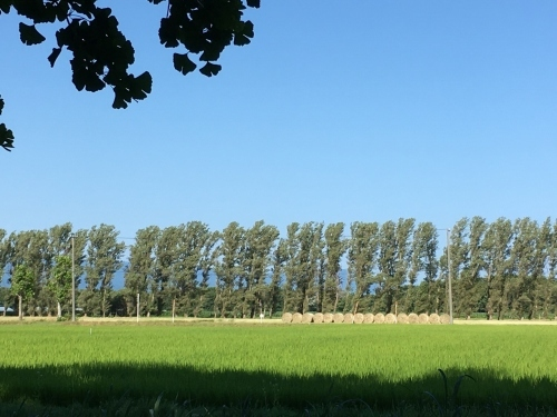 あいの里緑地散歩と薬草園_e0326953_19514810.jpg