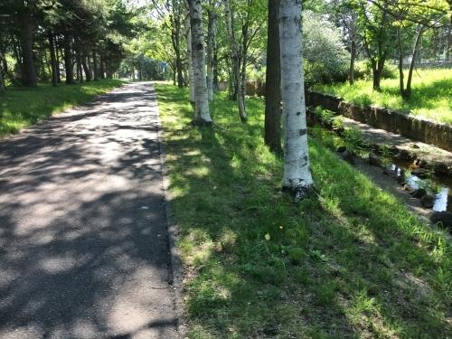 あいの里緑地散歩と薬草園_e0326953_20014637.jpg