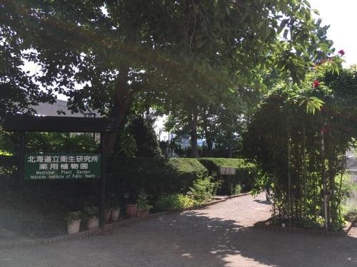 あいの里緑地散歩と薬草園_e0326953_21243077.jpeg