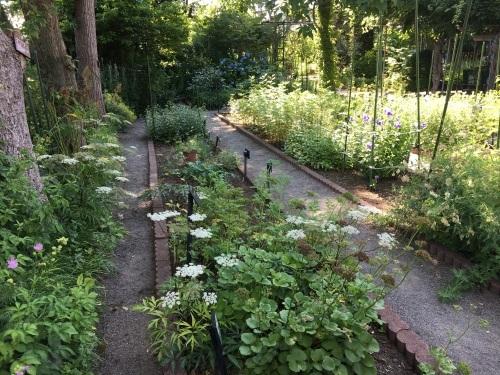 あいの里緑地散歩と薬草園_e0326953_21284723.jpeg