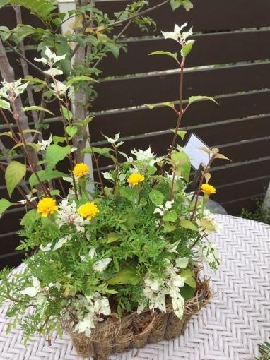 入荷しました~ガーデン雑貨販売と外構工事の広島市佐伯区楽樹工房_f0205854_16224811.jpg