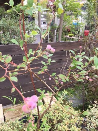 入荷しました~ガーデン雑貨販売と外構工事の広島市佐伯区楽樹工房_f0205854_16230677.jpg