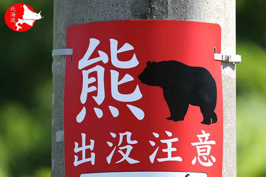 札幌市のヒグマ_c0347559_11583588.jpg