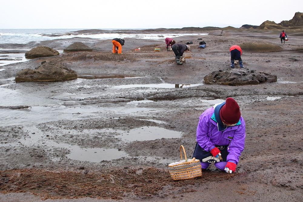 コラムリレー(第153回)鴎島での海苔採りと加工_f0228071_13235058.jpg