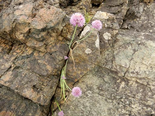 海辺に生きる植物たち_d0366590_07500821.jpg