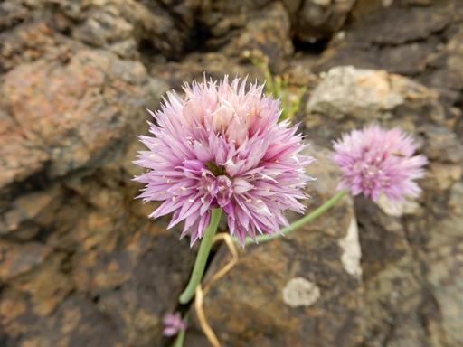海辺に生きる植物たち_d0366590_07500861.jpg