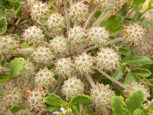 海辺に生きる植物たち_d0366590_07520986.jpg