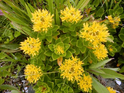 海辺に生きる植物たち_d0366590_08122260.jpg