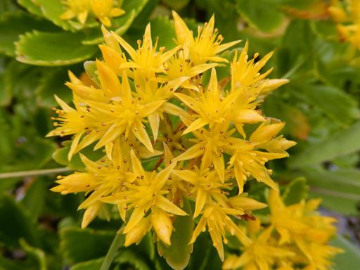 海辺に生きる植物たち_d0366590_08122378.jpg