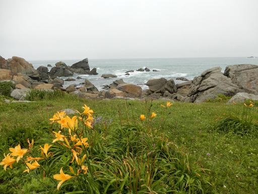海辺に生きる植物たち_d0366590_08132210.jpg