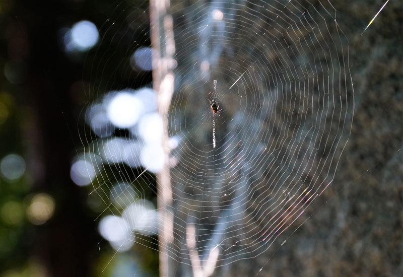 クモの巣_d0162994_08210795.jpg