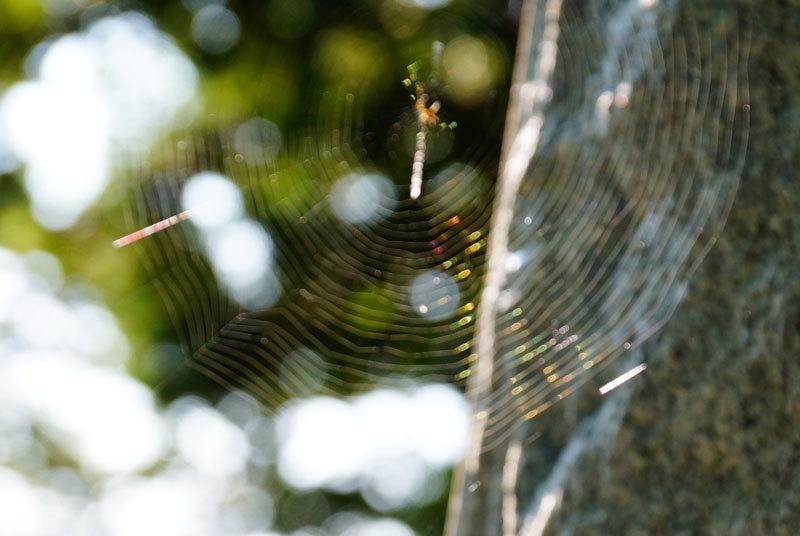 クモの巣_d0162994_08211728.jpg
