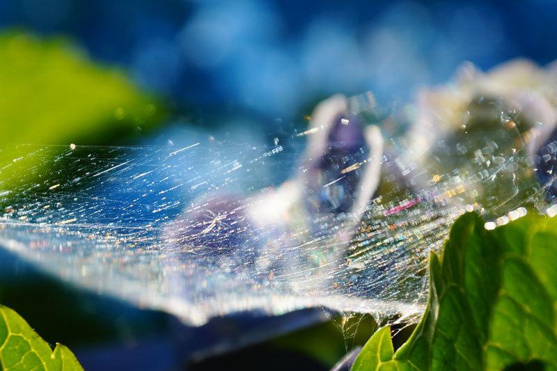 クモの巣_d0162994_08222147.jpg