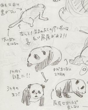 白黒大熊猫制作記_f0152544_11500497.jpg