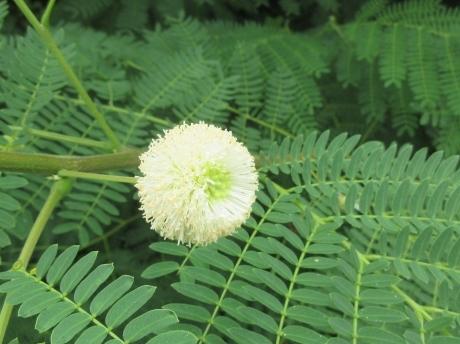 久高島の植物_a0203003_19590678.jpg