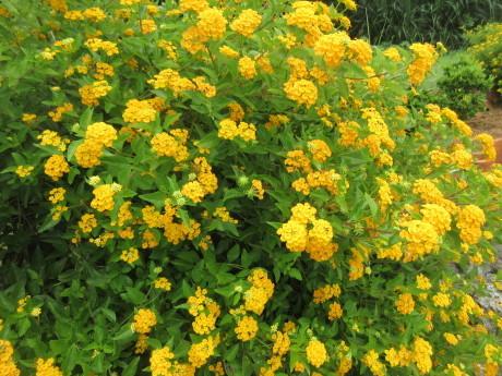 久高島の植物_a0203003_19594348.jpg