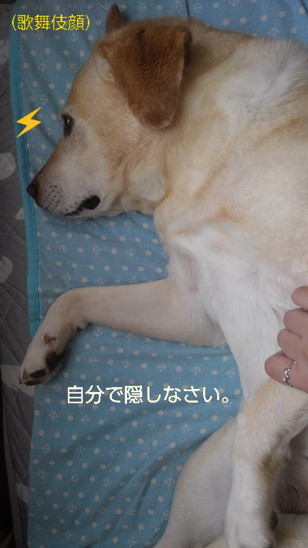 半田素麺 夏野菜カレー(&おまけ)_b0339522_16350498.jpg