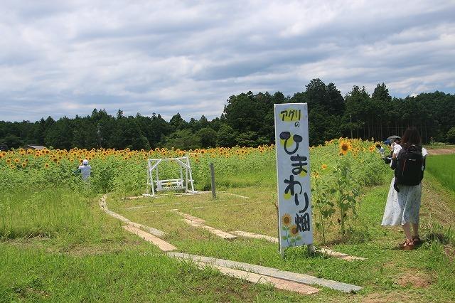 アグリのひまわり畑(その1)(撮影:7月2日)_e0321325_14234766.jpg