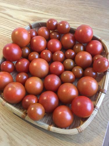 夏野菜の収穫_c0201749_09403297.jpg