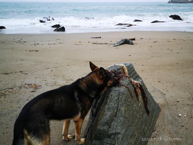 種差海岸♪_f0067179_20125854.jpg