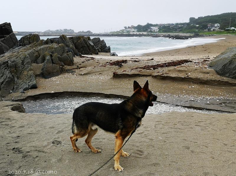 種差海岸♪_f0067179_20130889.jpg