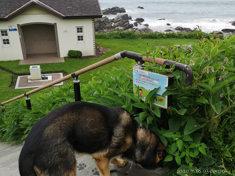 種差海岸♪_f0067179_20132555.jpg