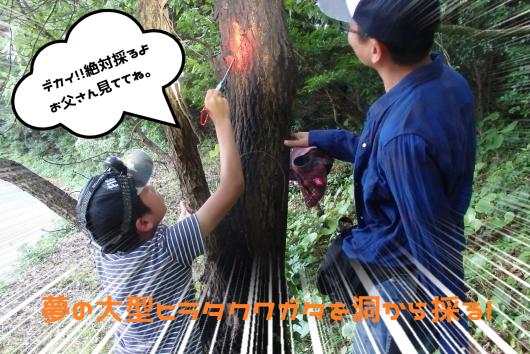 洞マニアな親子採集ガイド!東京都G様2日連続、でっかいヒラタクワガタを採る!_f0183484_02574706.png