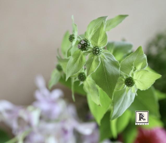 7月にお届けした「季節のお花便り」です_c0128489_00132898.jpeg