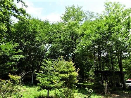 企業の森活動日記 サーラエナジー㈱ サーラの森_d0105723_19212088.jpg
