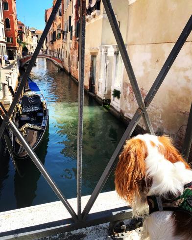 イタリア・ロックダウン後のヴェネツィアの状況。前編_b0170549_17343507.jpeg