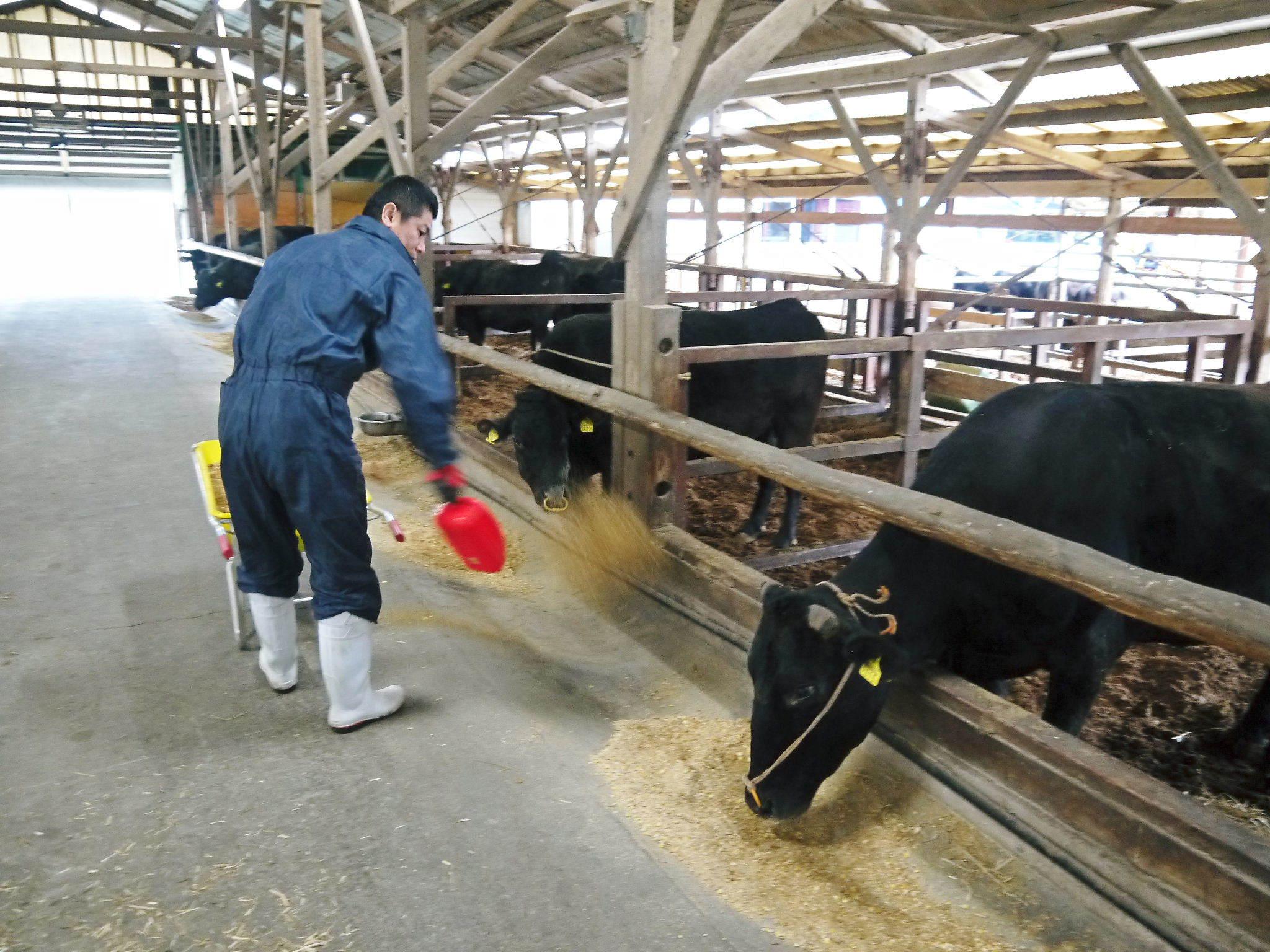 熊本県産の黒毛和牛を100%のハンバーグステーキ!今月は10月21日に出荷します!数量限定販売です!_a0254656_19394895.jpg