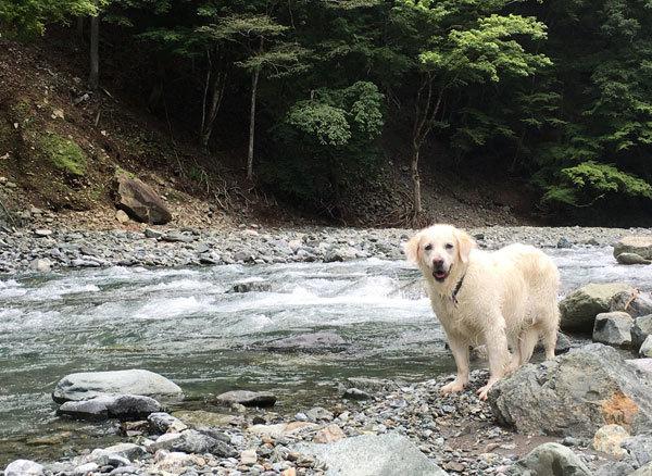 川に行ってきまちた!_c0110361_16373371.jpg