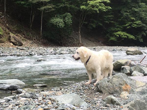 川に行ってきまちた!_c0110361_16374261.jpg