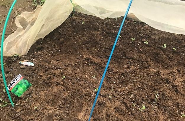 カボチャ初収穫、ネギ追肥・土寄せ7・20~21_c0014967_21035810.jpg