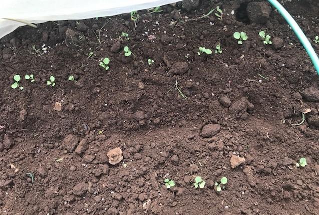 カボチャ初収穫、ネギ追肥・土寄せ7・20~21_c0014967_21043866.jpg