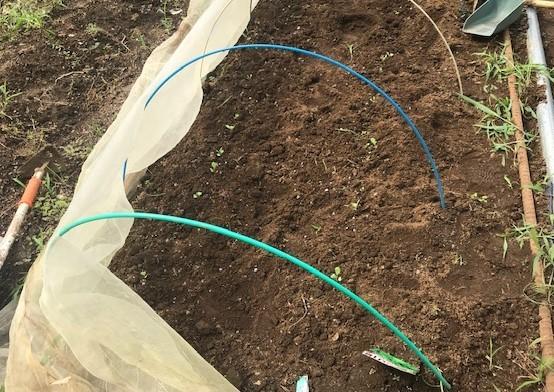 カボチャ初収穫、ネギ追肥・土寄せ7・20~21_c0014967_21045193.jpg