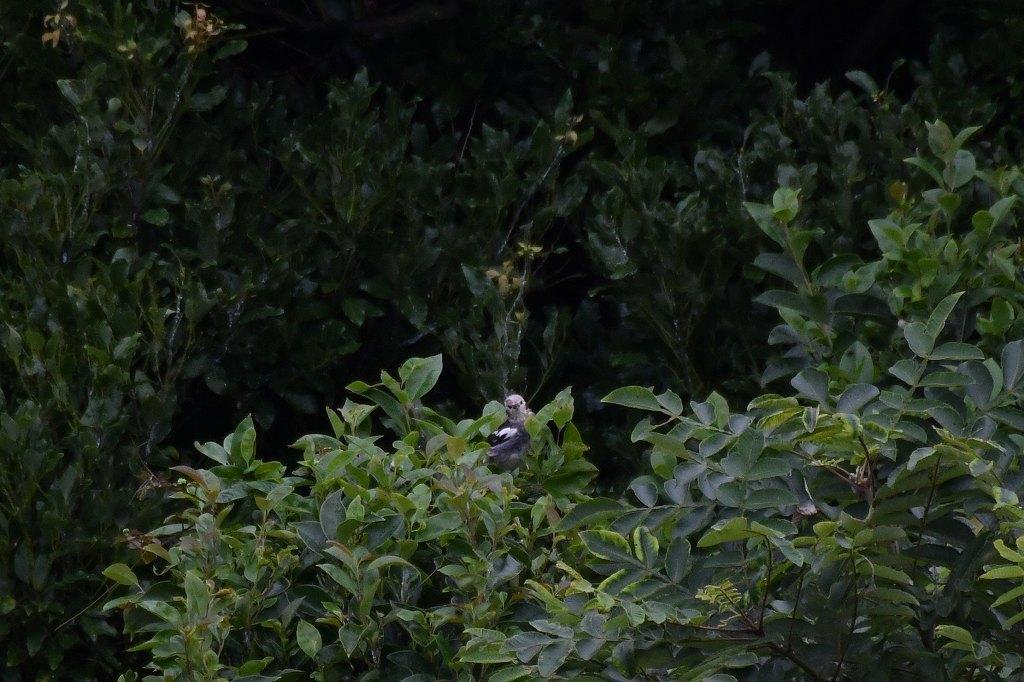 ヨシゴイやコムクドリなどが見られました!★先週末の鳥類園(2020.7.18~19)_e0046474_00122204.jpg