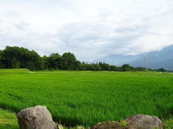 富士見町Tさん邸の現場より 2_a0211886_16564356.jpg