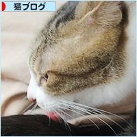子猫と先住猫_a0389088_10595315.jpg