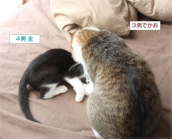 子猫と先住猫_a0389088_10595384.jpg