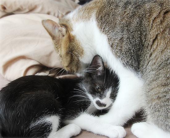 子猫と先住猫_a0389088_10595431.jpg